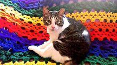 Kitty's love the Skull Afghan too! Skulls Crochet Pattern @ Raverly.com