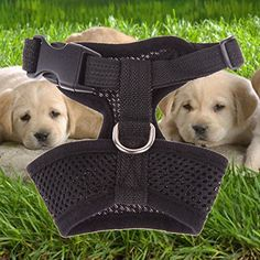 Chinatera Dog Harness Soft Air Nylon Mesh Pet Harness Dog Cloth Dog Cat Vest black XL * You can get more details by clicking on the image.