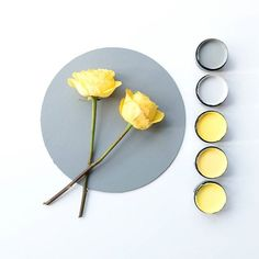 Loving these soft lemon tones which team up well with a cool grey palette. Background in Resene Black White, circle in Resene Double Stack. Testpots from top - Resene Double Stack, Resene Half Jumbo, Resene Broom, Resene Wild Thing, Resene Gorse #Resene #Reseneyellow&grey #Resenecolour #Resenemoodboard #colour