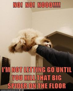 Funny cat picture joke. For the best funny jokes pictures visit www.bestfunnyjokes4u.com/