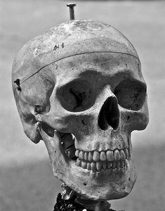 Skull 37 by cmdpirxII