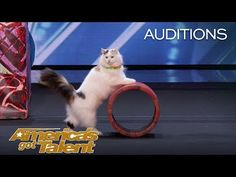 Cats can do anything! A group of felines on America's Got Talent proved just that, wowing viewers with an awe-inspiring acrobatics routine.