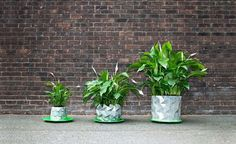Form-Shifting Origami-Impressed Pots Develop With Your Plant Flowers develop; Aside from this particular, origami impressed Development pot. Because the plant grows and expands, so does the po. Big Plants, Growing Plants, Indoor Plants, Shade Plants, Large Planters, Hanging Planters, Planter Pots, Ancient Japanese Art, Replant