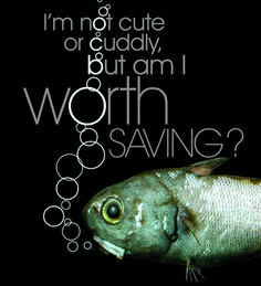 CLICK THROUGH TO DRESS YOUR FISH AND SEND A MESSAGE TO THE UN SECRETARY GENERAL - Save the deep sea