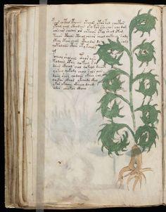 Voynich manuscript in an unidentified language on parchment