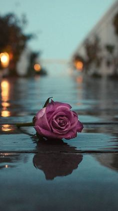 Rose on the wet road The post Rose on the wet road appeared first on hintergrundbilder. Desktop Background Pictures, Cute Wallpaper Backgrounds, Pretty Wallpapers, Tumblr Wallpaper, Aesthetic Iphone Wallpaper, Aesthetic Wallpapers, Background Images For Quotes, Tumblr Roses, Amazing Photography