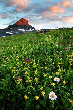 Glacier Flower Field Sunset at Glacier National park