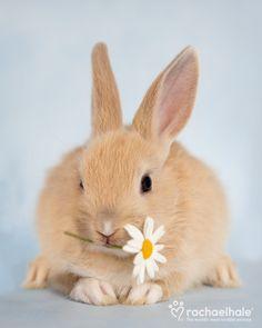 Konijn Primrose (Dwarf Rabbit) - A little Primrose amongst the daisies (pic by Rachael Hale)
