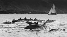 Rolex Ilhabela Sailing Week