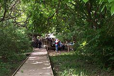 Boy Scout Woods, High Island,TX - great birding area.