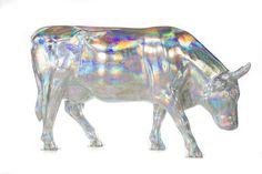 North Carolina Shine On Cow