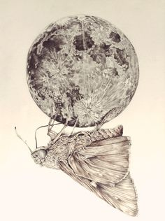 """James Ormiston - """"In which a moth is enticed by the light of the moon"""""""