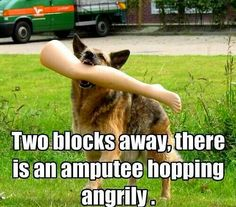 011fe69e7faddf12a8f26b886e065aad funny animal pictures funny animals amputee humour humor amputee life pinterest humor humour and,Funny Amputee Memes