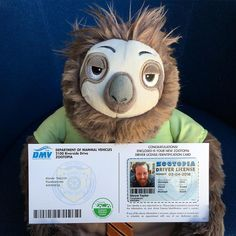 Drew went to the DMV in #Zootopia today and Flash gave him his driver's license. #SHREWtaylor