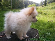 I want....need this ball of fluff.