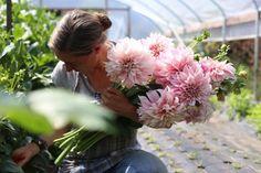 Cut Flower Garden, Flower Farm, Cut Flowers, Fresh Flowers, Spring Flowers, Fresco, Beautiful Gardens, Beautiful Flowers, Enchanted Florist