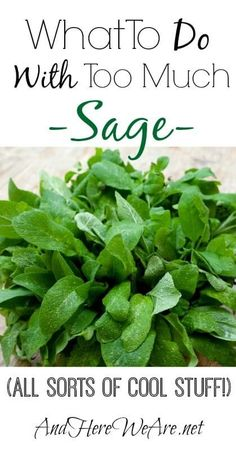 What to do with sage when you don't want your bountiful harvest to go to waste! There are so many ways that you an use it, as food and…