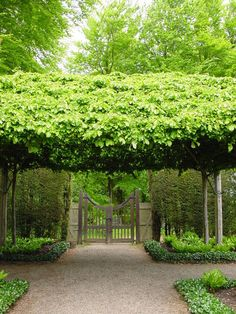 The traditional shading method for villa gardens around Lake Maggiore and other Italian lakes is to create living parasols by training and clipping trees to form a green ceiling.