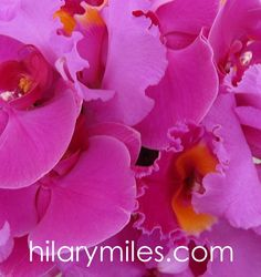 Magenta Cattleya and Phalaenopsis Orchids Phalaenopsis Orchid, Orchids, Magenta Flowers, Rose, Plants, Pink, Roses, Lilies, Flora