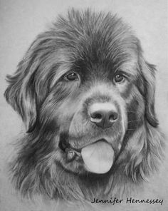 Newfoundland Dog by ~Sheebaa on deviantART