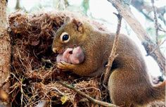 mama squirrel and her new baby - aawww