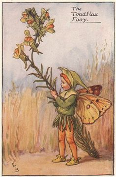 FLOWER FAIRIES/BOTANICALS: The Toadflax Fairy; This is an original vintage Cicely Mary Barker Flower fairies colour print. It is not a modern reproduction, c1935; approximate size 11.0 x 7.0cm, 4.25 x 2.75 inches