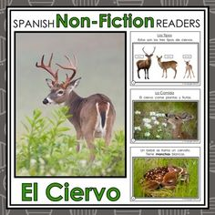 Forest Animals Non-Fiction Spanish Readers - El Ciervo The Deer  These Spanish Non-Fiction Readers were created to build student background knowledge and vocabulary, while maintaining simple easy-to-follow text for readers beginning to read.   Keywords: Forest Animals, Animales del Bosque, Spanish Emergent, Guided Reading Books, Spanish Books, Libros de la Lectura Guiada, Libros de No-Ficción, Non-Fiction Books, El Ciervo, The Deer, El Venado, Spanish Immersion