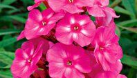 15 Most Colorful Perennials for Your Yard
