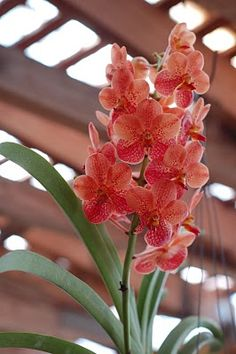 orchid- what an unusual color!