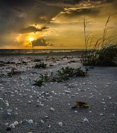 After the Rain / Sanibel Island, FL
