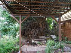Pergola, Outdoor Structures, New Homes, Outdoor Pergola