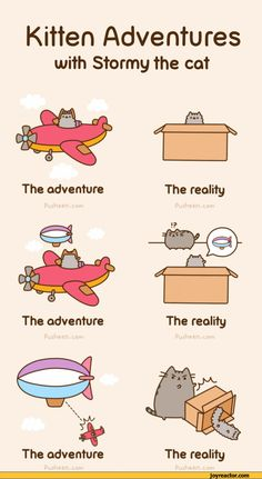 Pusheen Jokes Best Cartoons And Various Comics Translated Into English Most Funny Comic Strips