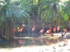 Palm Beach Zoo - West Palm Beach, FL.... Love it!!! I lived a short 10min bike ride away!!!!!!