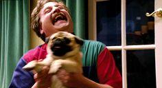 A febre epidêmica dos Pugs - Interesses Sutis