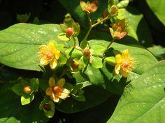 Tiny bush flowers