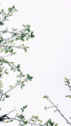 wallpaper backgrounds 50 Delightful Free Phone Wallpapers In 2019 Backgrounds Wallpapers Backgrounds Free iPhone Wallpapers Tumblr Wallpaper, Free Phone Wallpaper, Iphone Background Wallpaper, Trendy Wallpaper, Aesthetic Iphone Wallpaper, Mobile Wallpaper, Aesthetic Wallpapers, Lion Wallpaper, Wallpaper Desktop