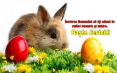 This rabbit may know a thing or two about Easter baskets, but nobunny knows dental plans like we do! Easter Sunday Images, Easter Bunny Pictures, Ostern Wallpaper, Happy Easter Quotes, Rabbit Wallpaper, Beautiful Rabbit, Easter Religious, Easter Wishes, About Easter