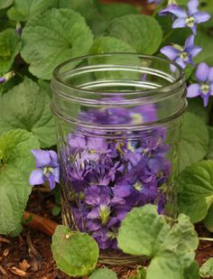 Five Uses for Violet Vinegar - vinegar bath, wasp stings, sunburns, hair rinse, and violet vinaigrette.