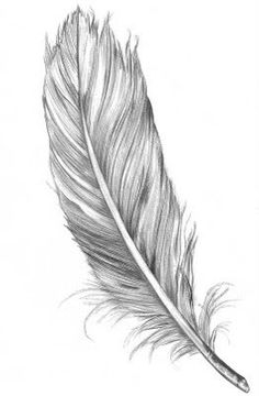 a sketched tattoo of a feather to symbolise change, growth and independence.