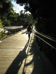 San Diego Zoo boardwalk