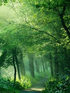 the real green forest