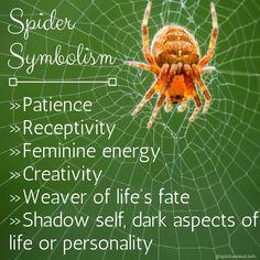 The Spider as Spirit Animal or Totem