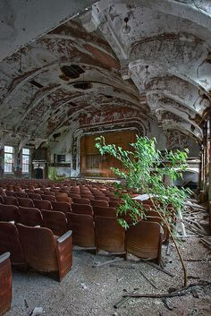 A tree has sprouted from the floor of this theatre in an abandoned state hospital - and this is on the first floor (or second floor to US readers)!