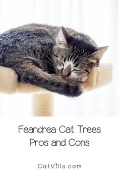 Feandrea cat trees are among some of the most popular on the market, and for a good reason! They're highly-rated, affordable, and fun for your kitty. With so many options, though, it can be hard to choose the best ones.