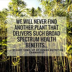 """Not only does hemp grow in a variety of climates and soil types it also grows very tightly spaced and has a fast growing rate (which leads to high yields). Ever wonder where the nickname """"weed"""" comes from? The hemp plant grows like one obviating the need for most pesticides (it is naturally resistant to most pests) herbicides fungicides and thriving on less water than most crops. Because of its resiliency it has also been flagged as a natural way to clean up soil pollution. Hemp can be used…"""