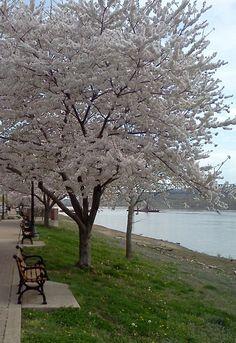 Spring in Madison IN