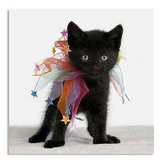 Bill Giyaman posted awww such a cute cat! to their -for the love of cats! Cute Black Kitten, Black Cats, Kittens And Puppies, Cats And Kittens, Crazy Cat Lady, Crazy Cats, I Love Cats, Cute Cats, Gatos Cats