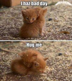 I haz bad day. Hug me