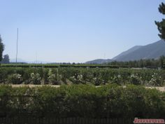 We drove to Viu Manet winery on our way into town, and I would love to stop back there again to enjoy a lunch on their beautiful grounds.