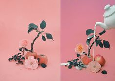 """Magic Apple Tree"" by Dom Sebastian Still Life Photography, Art Photography, Pattern Photography, Metal Magazine, You Are Amazing, Apple Tree, Pink Aesthetic, Art Direction, Art Inspo"
